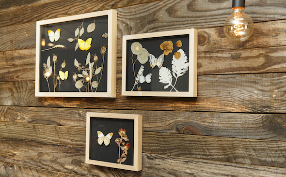 butterfly boxes by Becca Barnet